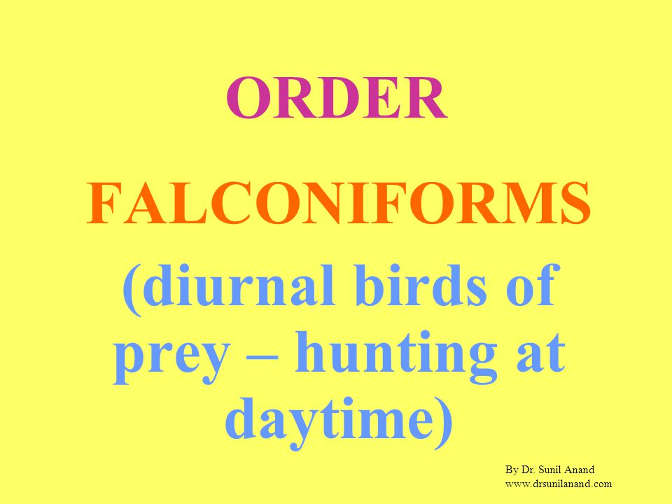 By Dr. Sunil Anand www.drsunilanand.com ORDER FALCONIFORMS (diurnal birds of prey – hunting at daytime)