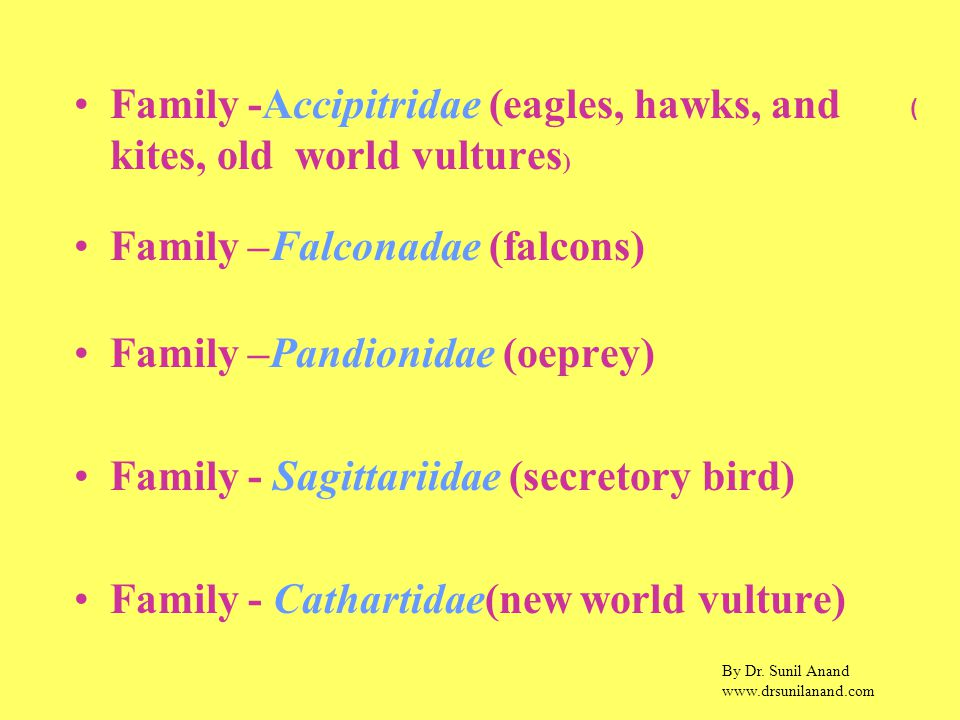 By Dr. Sunil Anand www.drsunilanand.com Family -Accipitridae (eagles, hawks, and kites, old world vultures ) Family –Falconadae (falcons) Family –Pand
