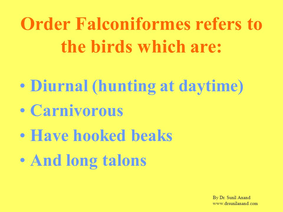 By Dr. Sunil Anand www.drsunilanand.com Order Falconiformes refers to the birds which are: Diurnal (hunting at daytime) Carnivorous Have hooked beaks