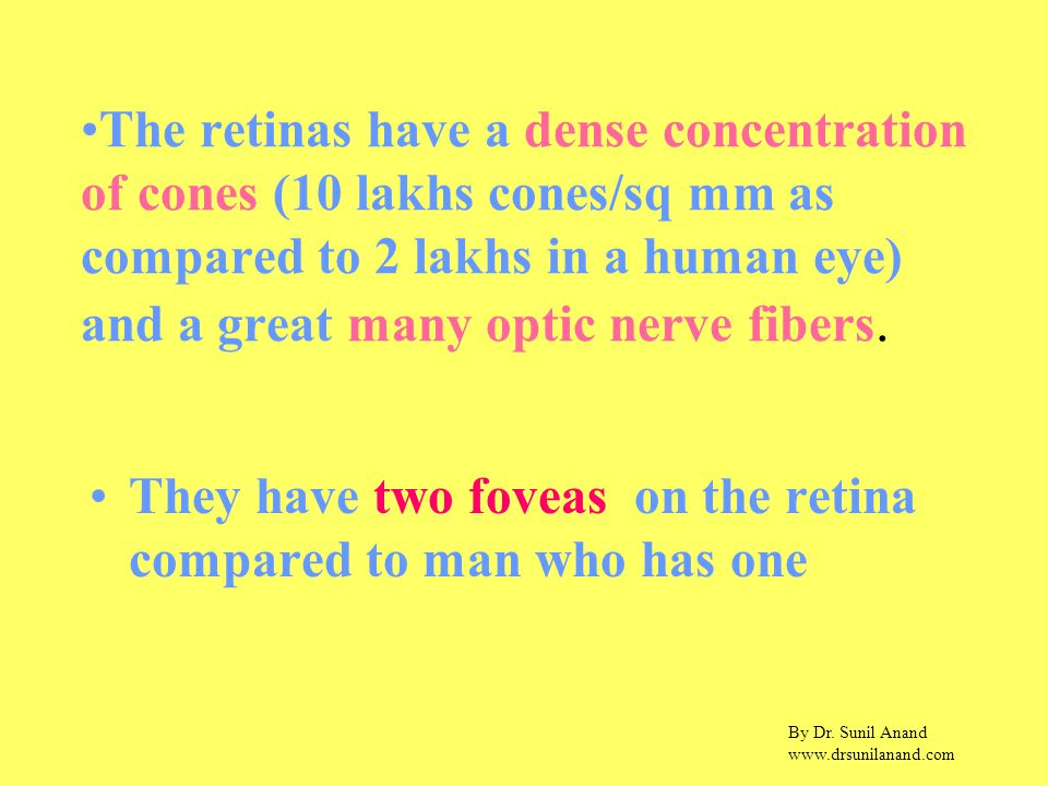 By Dr. Sunil Anand www.drsunilanand.com The retinas have a dense concentration of cones (10 lakhs cones/sq mm as compared to 2 lakhs in a human eye) a