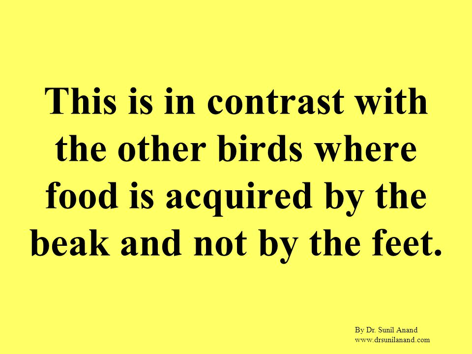 By Dr. Sunil Anand www.drsunilanand.com This is in contrast with the other birds where food is acquired by the beak and not by the feet.