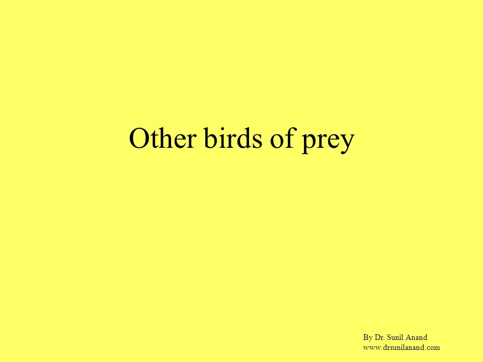 By Dr. Sunil Anand www.drsunilanand.com Other birds of prey