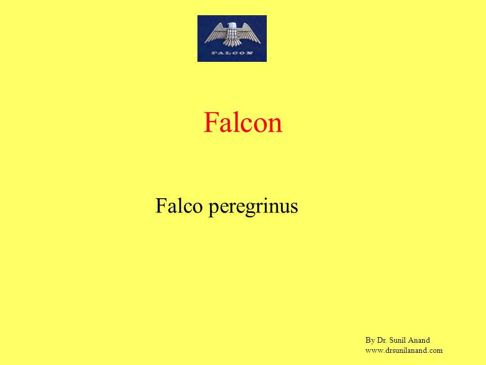 By Dr. Sunil Anand www.drsunilanand.com Falco peregrinus Falcon