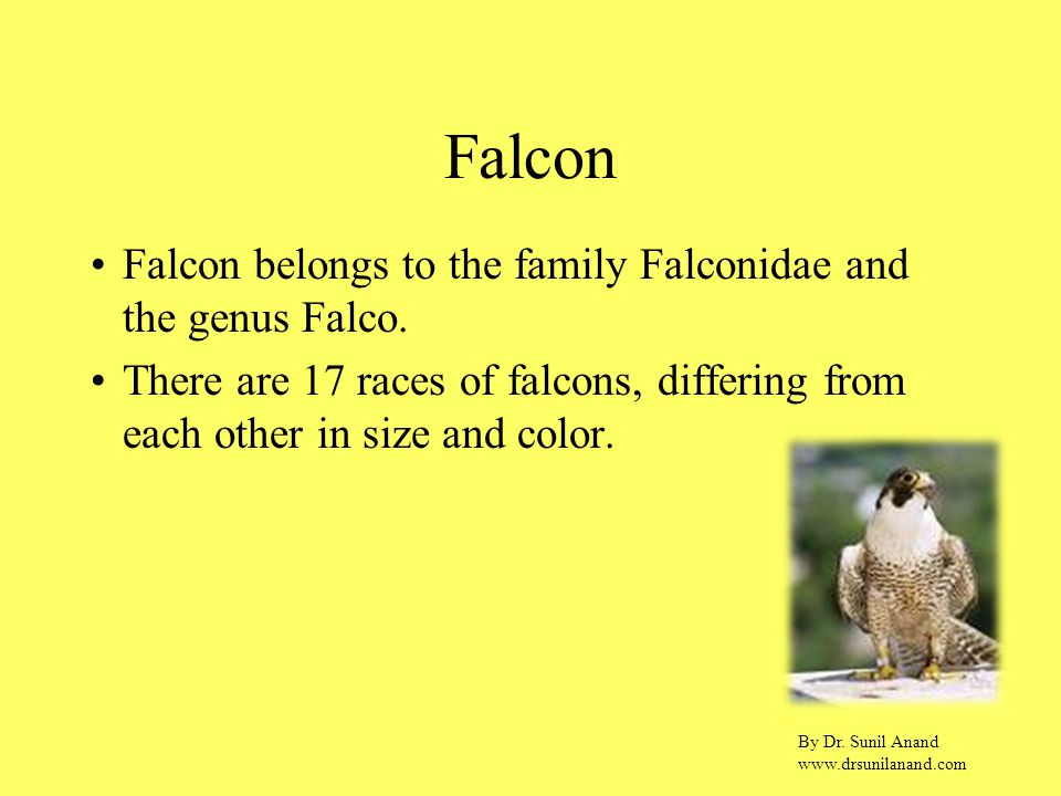 By Dr. Sunil Anand www.drsunilanand.com Falcon Falcon belongs to the family Falconidae and the genus Falco. There are 17 races of falcons, differing f