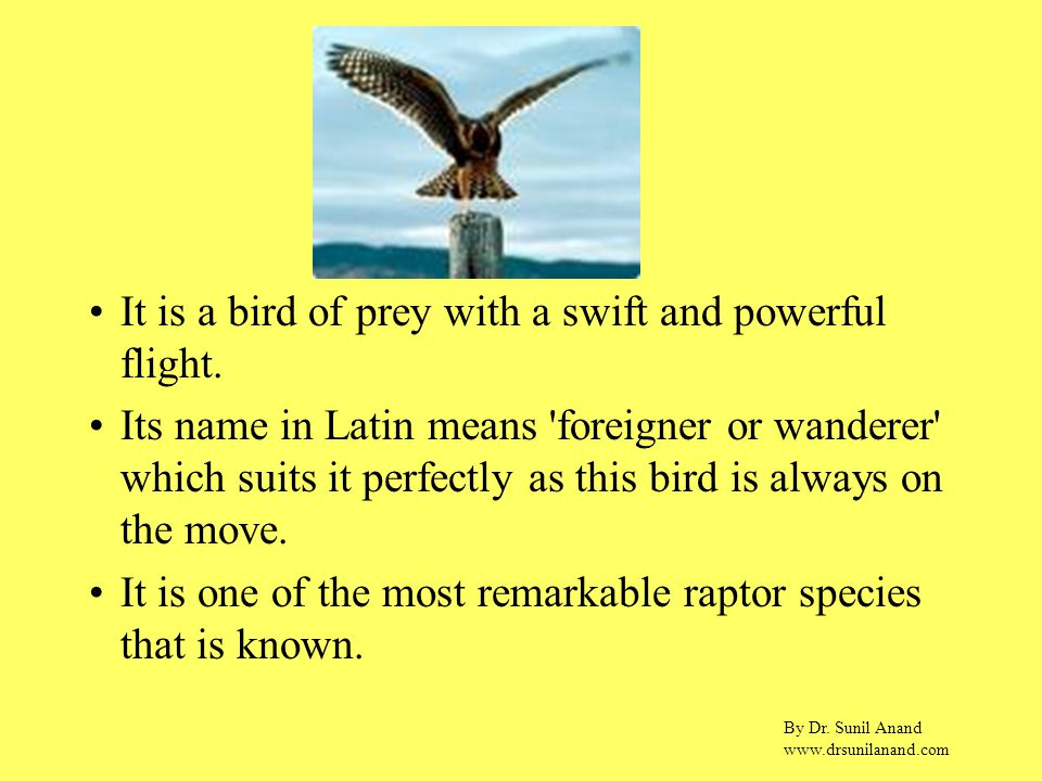 By Dr. Sunil Anand www.drsunilanand.com It is a bird of prey with a swift and powerful flight.
