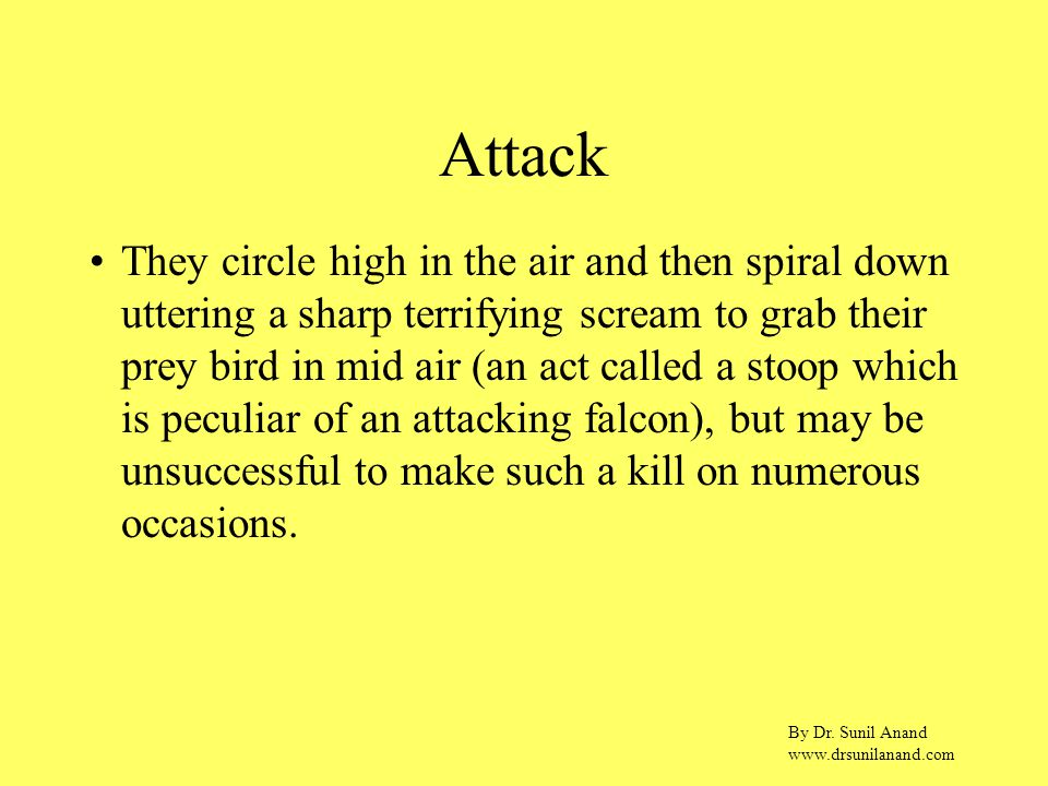 By Dr. Sunil Anand www.drsunilanand.com Attack They circle high in the air and then spiral down uttering a sharp terrifying scream to grab their prey