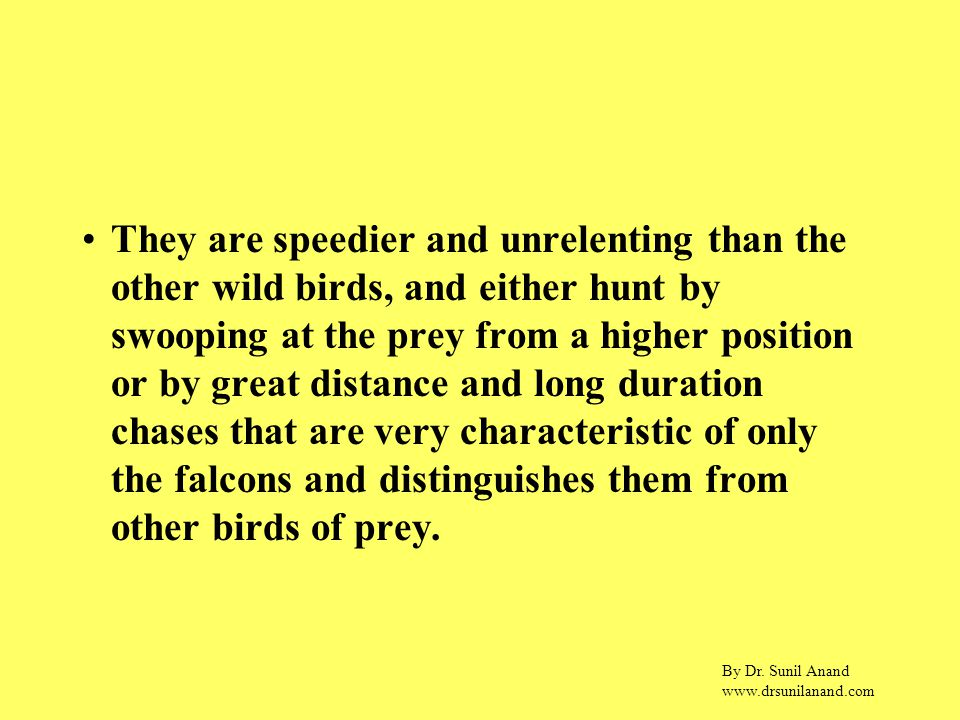 By Dr. Sunil Anand www.drsunilanand.com They are speedier and unrelenting than the other wild birds, and either hunt by swooping at the prey from a hi