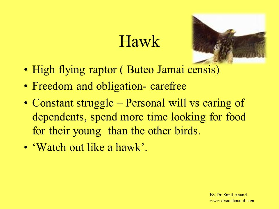 By Dr. Sunil Anand www.drsunilanand.com Hawk High flying raptor ( Buteo Jamai censis) Freedom and obligation- carefree Constant struggle – Personal wi