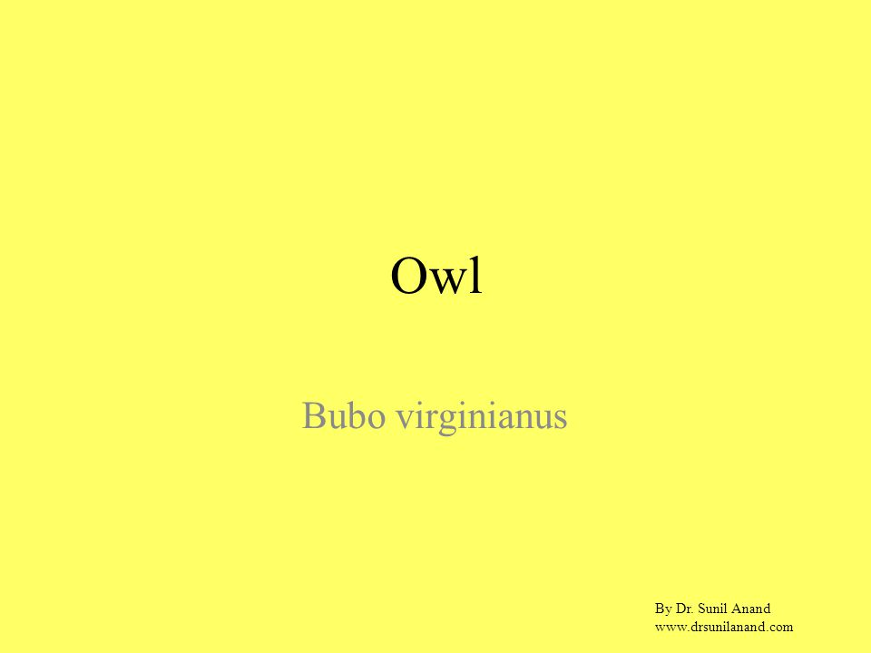 By Dr. Sunil Anand www.drsunilanand.com Owl Bubo virginianus