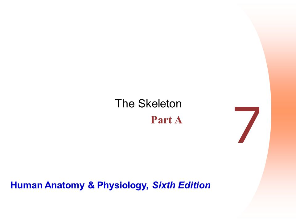 Human Anatomy & Physiology, Sixth Edition 7 The Skeleton Part A