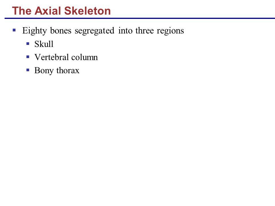 The Axial Skeleton  Eighty bones segregated into three regions  Skull  Vertebral column  Bony thorax