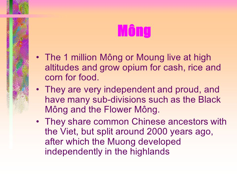 Mông The 1 million Mông or Moung live at high altitudes and grow opium for cash, rice and corn for food.