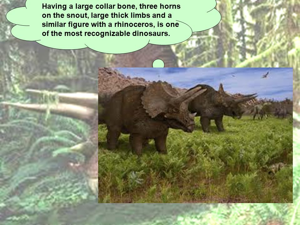 Having a large collar bone, three horns on the snout, large thick limbs and a similar figure with a rhinoceros, is one of the most recognizable dinosaurs.