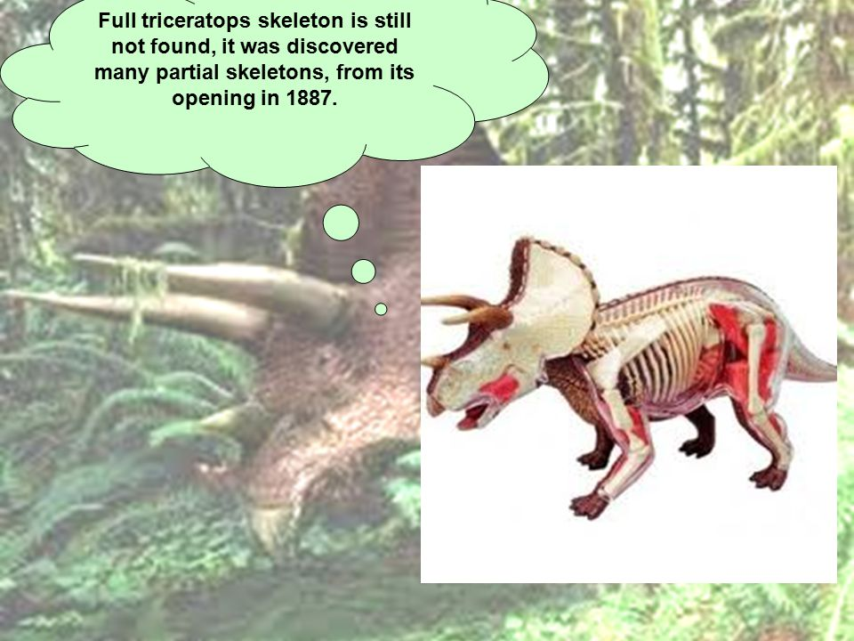 Full triceratops skeleton is still not found, it was discovered many partial skeletons, from its opening in 1887.