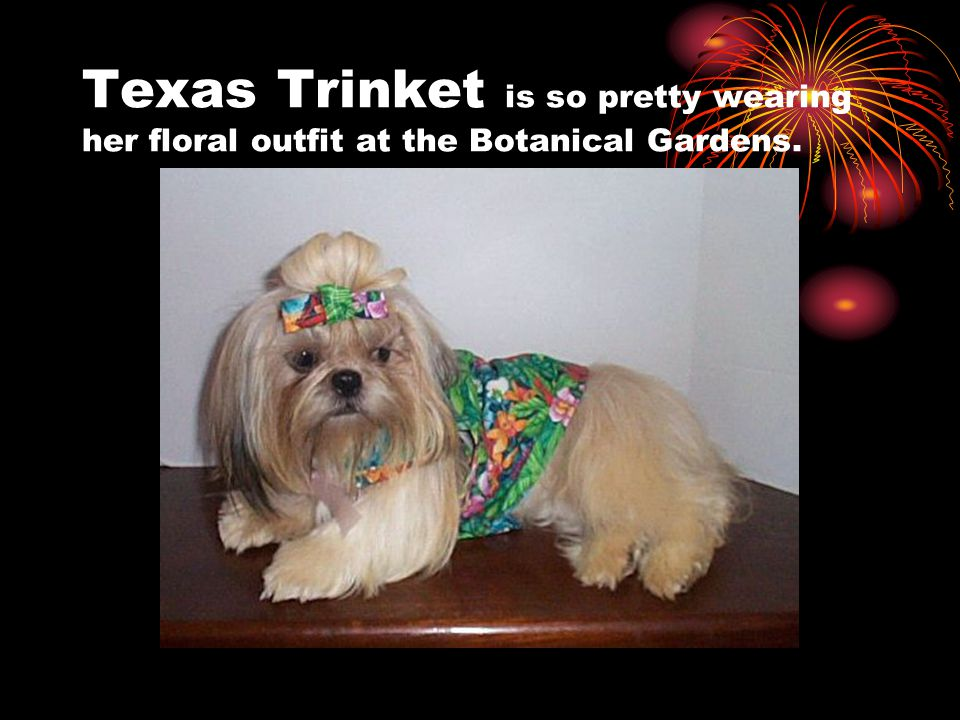 Texas Trinket is so pretty wearing her floral outfit at the Botanical Gardens.