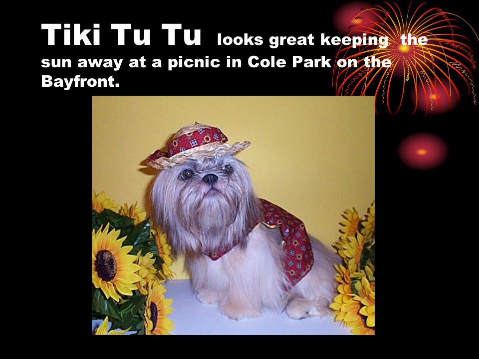 Tiki Tu Tu looks great keeping the sun away at a picnic in Cole Park on the Bayfront.