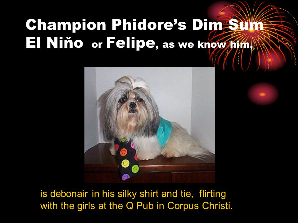 Champion Phidore's Dim Sum El Niňo or Felipe, as we know him, is debonair in his silky shirt and tie, flirting with the girls at the Q Pub in Corpus Christi.