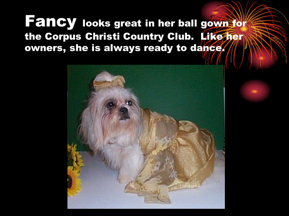 Fancy looks great in her ball gown for the Corpus Christi Country Club.