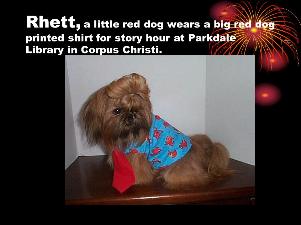Rhett, a little red dog wears a big red dog printed shirt for story hour at Parkdale Library in Corpus Christi.