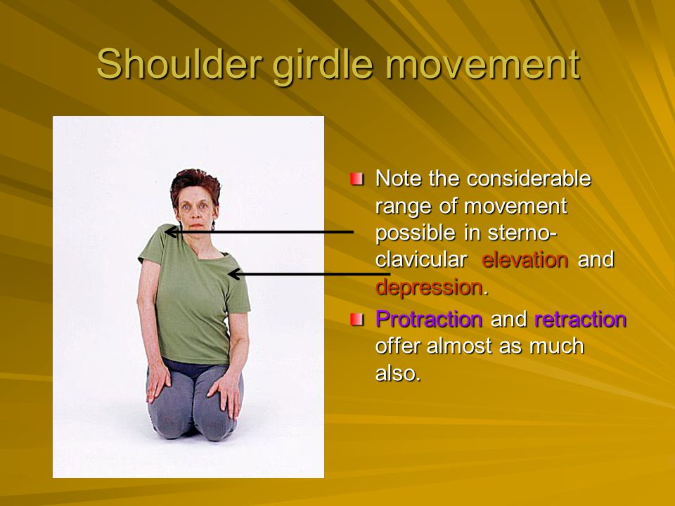 Shoulder girdle movement Note the considerable range of movement possible in sterno- clavicular elevation and depression. Protraction and retraction o