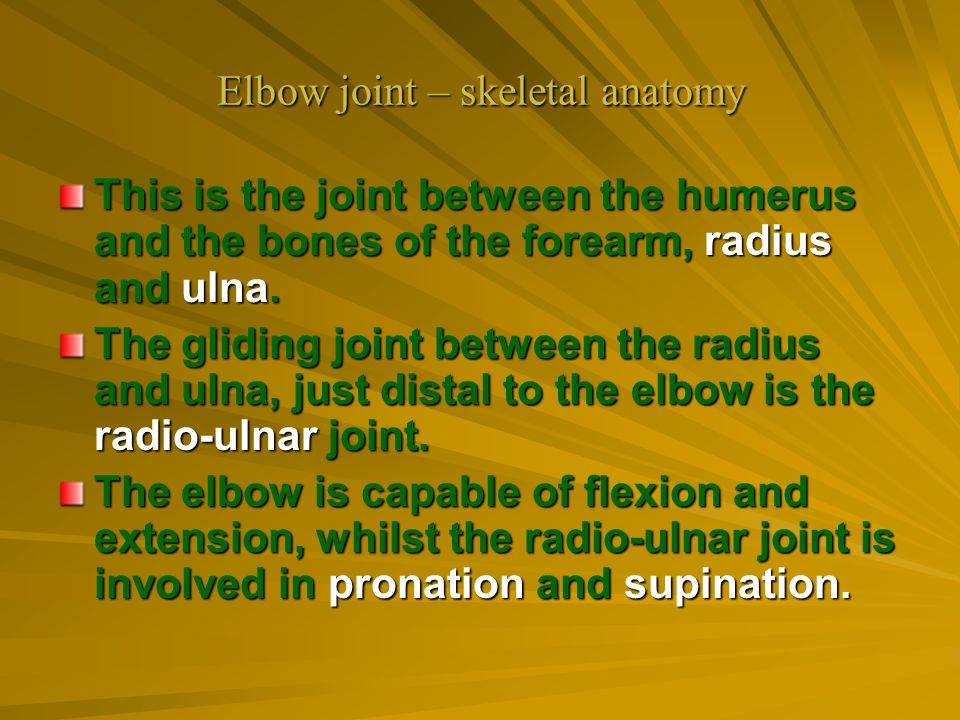 Elbow joint – skeletal anatomy This is the joint between the humerus and the bones of the forearm, radius and ulna. The gliding joint between the radi