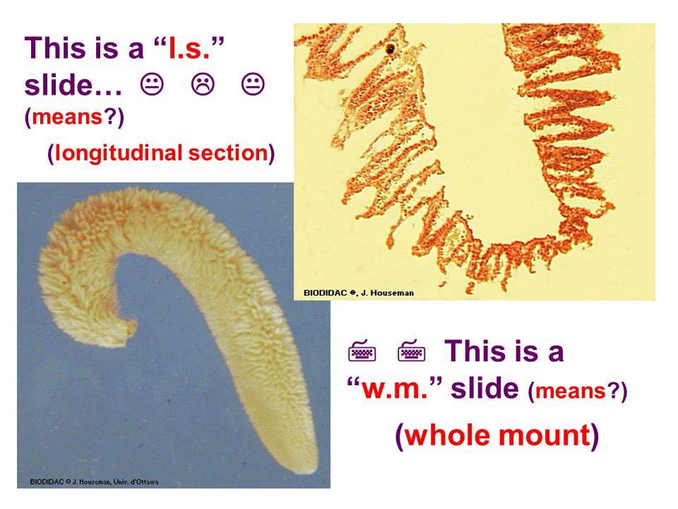 This is a l.s. slide…    (means?)   This is a w.m. slide (means?) (longitudinal section) (whole mount)