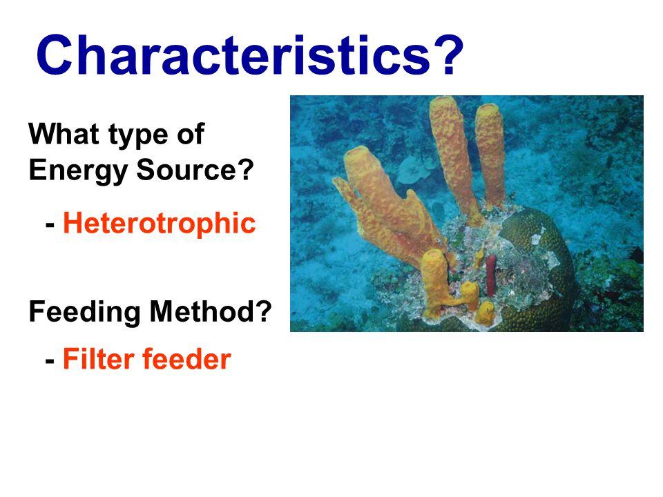 Characteristics? - Heterotrophic What type of Energy Source? - Filter feeder Feeding Method?