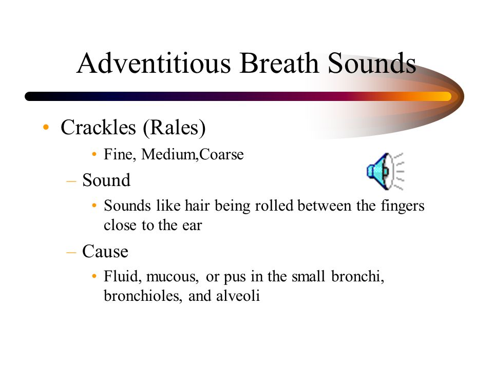 Adventitious Breath Sounds Crackles (Rales) Fine, Medium,Coarse –Sound Sounds like hair being rolled between the fingers close to the ear –Cause Fluid, mucous, or pus in the small bronchi, bronchioles, and alveoli