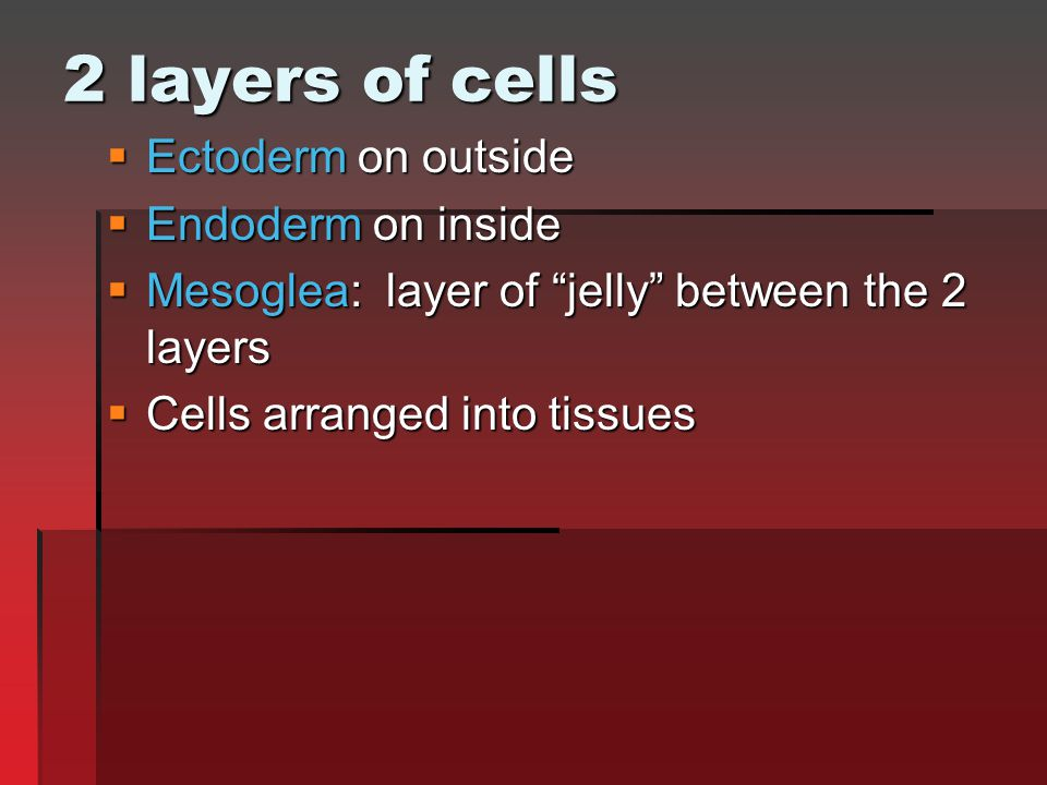 "2 layers of cells  Ectoderm on outside  Endoderm on inside  Mesoglea: layer of ""jelly"" between the 2 layers  Cells arranged into tissues"
