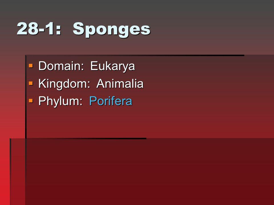 28-1: Sponges  Domain: Eukarya  Kingdom: Animalia  Phylum: Porifera