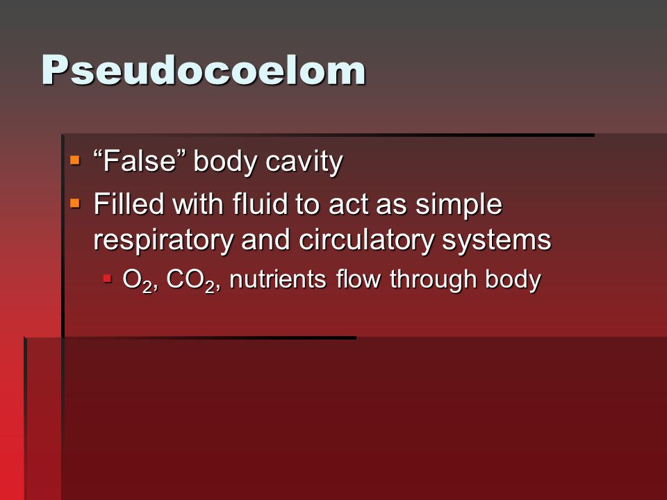 "Pseudocoelom  ""False"" body cavity  Filled with fluid to act as simple respiratory and circulatory systems  O 2, CO 2, nutrients flow through body"