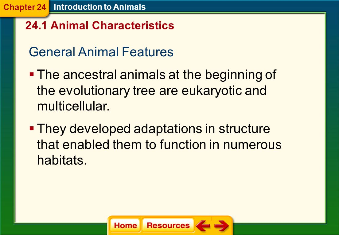 Click on a lesson name to select. Chapter 24 Introduction to Animals Section 1: Animal Characteristics Section 2: Animal Body Plans Section 3: Sponges