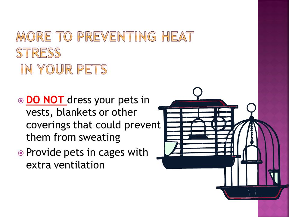  DO NOT dress your pets in vests, blankets or other coverings that could prevent them from sweating  Provide pets in cages with extra ventilation