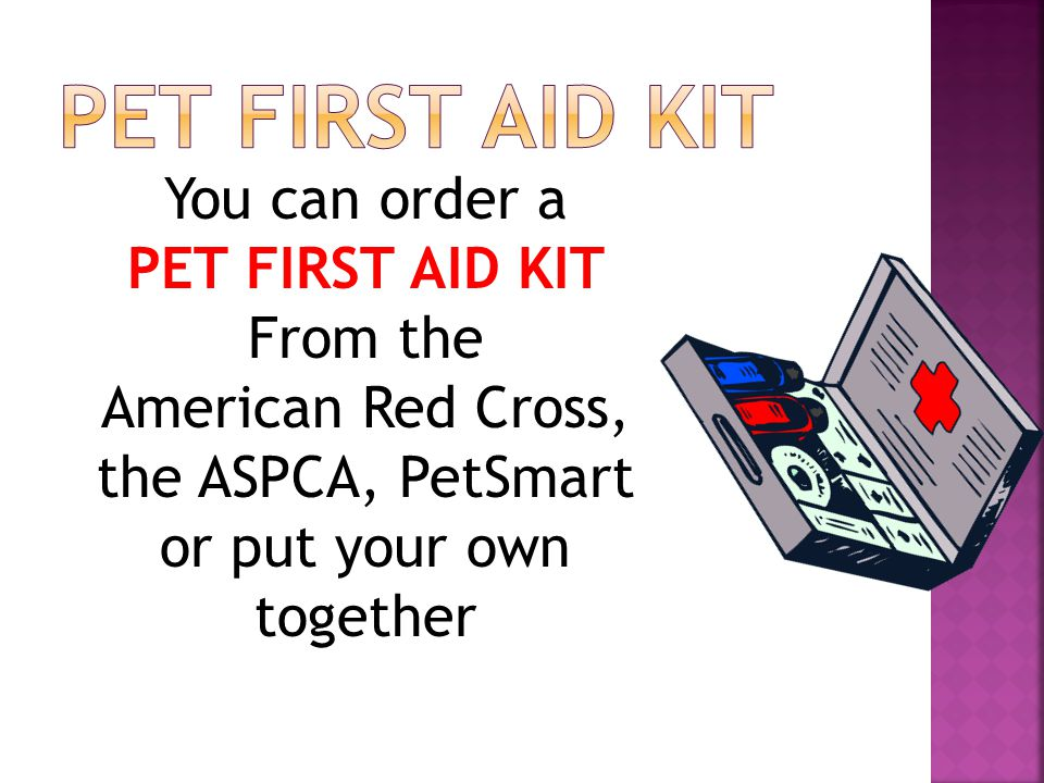 You can order a PET FIRST AID KIT From the American Red Cross, the ASPCA, PetSmart or put your own together