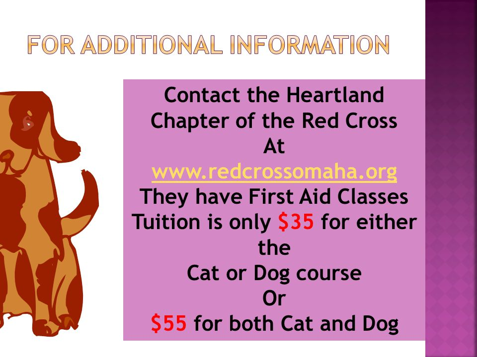 Contact the Heartland Chapter of the Red Cross At www.redcrossomaha.org They have First Aid Classes Tuition is only $35 for either the Cat or Dog course Or $55 for both Cat and Dog