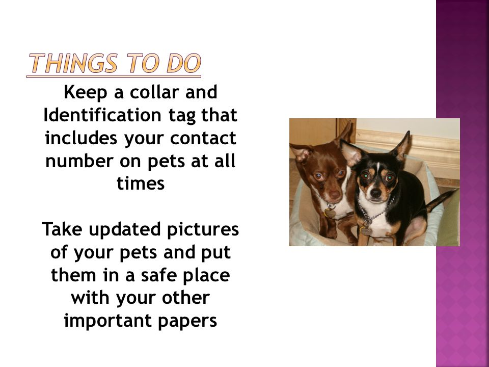 Keep a collar and Identification tag that includes your contact number on pets at all times Take updated pictures of your pets and put them in a safe place with your other important papers