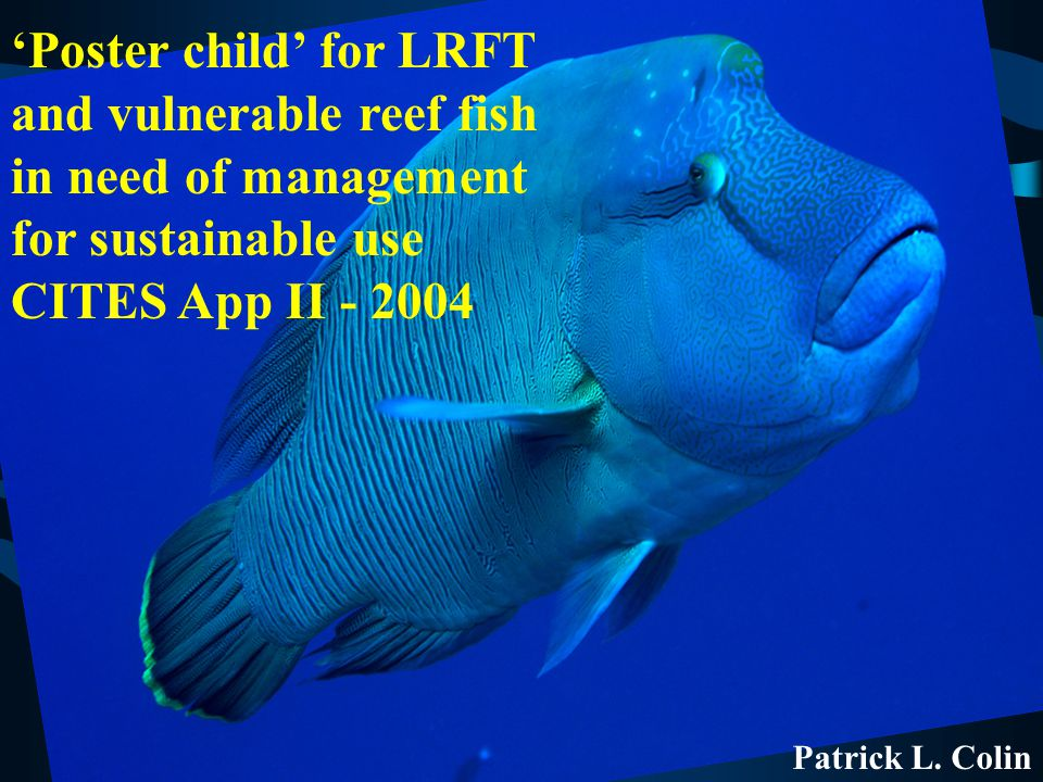 Patrick L. Colin 'Poster child' for LRFT and vulnerable reef fish in need of management for sustainable use CITES App II - 2004