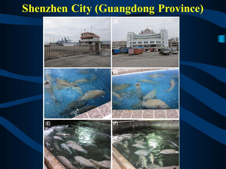 Shenzhen City (Guangdong Province)