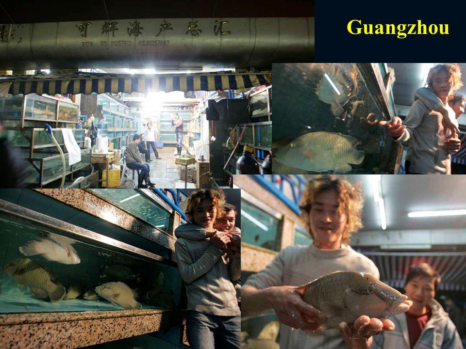 Alex Hofford Guangzhou