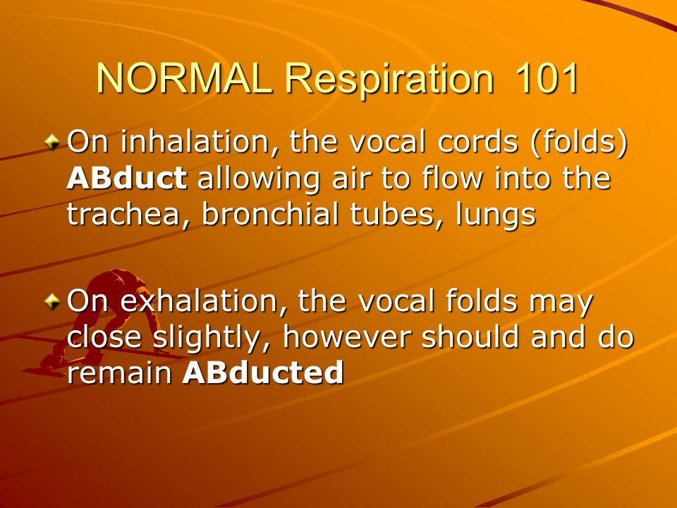 NORMAL Respiration 101 On inhalation, the vocal cords (folds) ABduct allowing air to flow into the trachea, bronchial tubes, lungs On exhalation, the