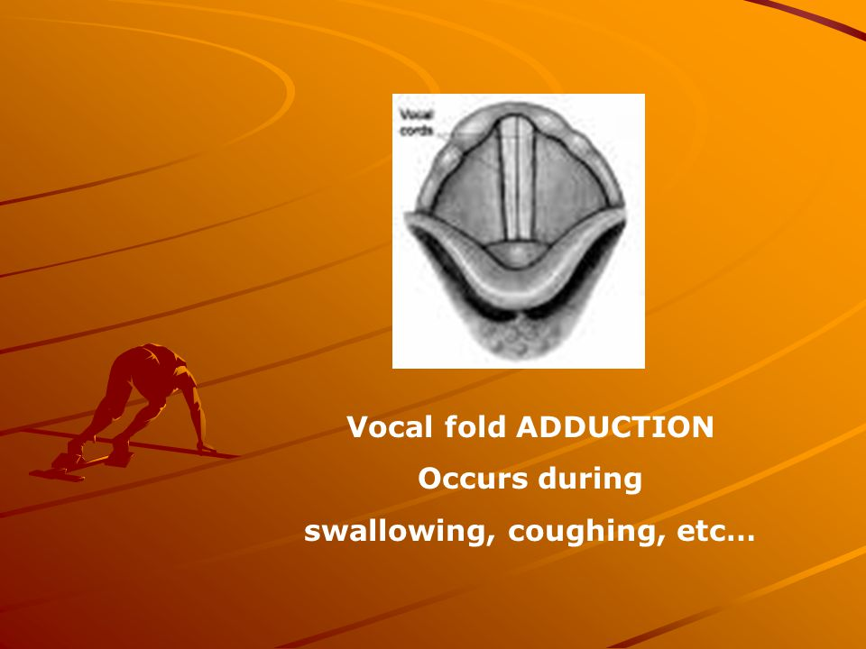 Vocal fold ADDUCTION Occurs during swallowing, coughing, etc…