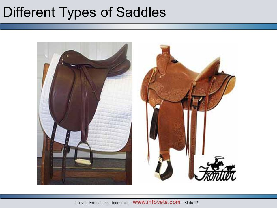Infovets Educational Resources – www.infovets.com – Slide 12 Different Types of Saddles