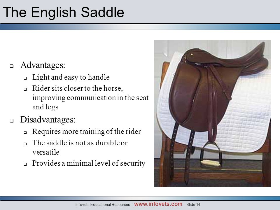 Infovets Educational Resources – www.infovets.com – Slide 14 The English Saddle  Advantages:  Light and easy to handle  Rider sits closer to the horse, improving communication in the seat and legs  Disadvantages:  Requires more training of the rider  The saddle is not as durable or versatile  Provides a minimal level of security