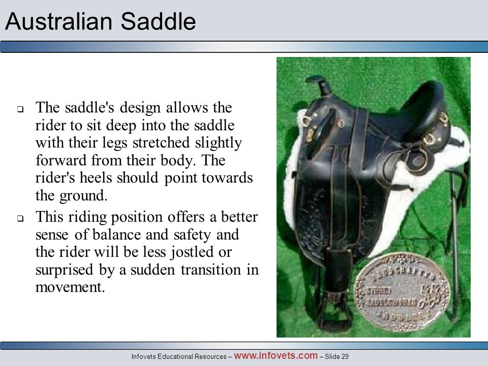 Infovets Educational Resources – www.infovets.com – Slide 29 Australian Saddle  The saddle s design allows the rider to sit deep into the saddle with their legs stretched slightly forward from their body.