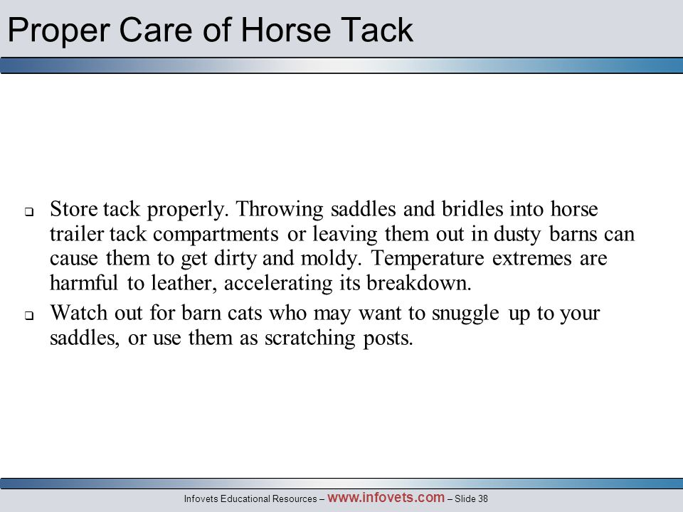 Infovets Educational Resources – www.infovets.com – Slide 38 Proper Care of Horse Tack  Store tack properly.