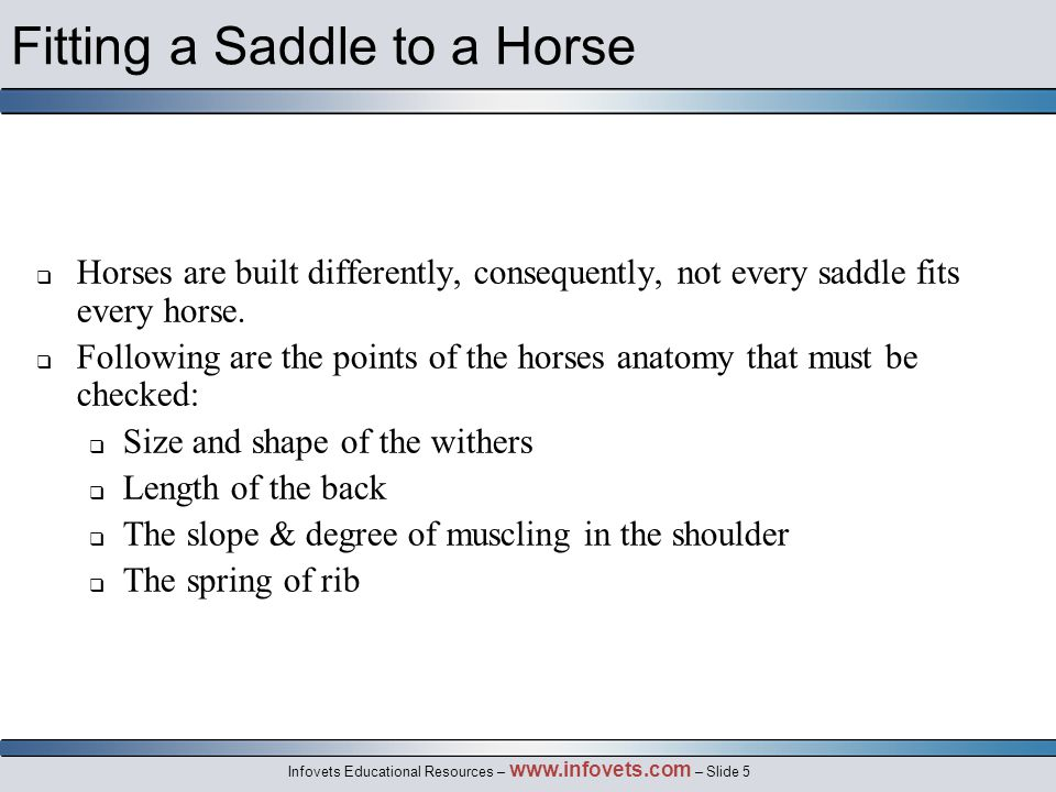 Infovets Educational Resources – www.infovets.com – Slide 5 Fitting a Saddle to a Horse  Horses are built differently, consequently, not every saddle fits every horse.