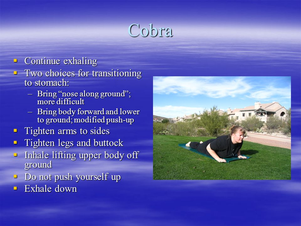 """Cobra  Continue exhaling  Two choices for transitioning to stomach: –Bring """"nose along ground""""; more difficult –Bring body forward and lower to grou"""