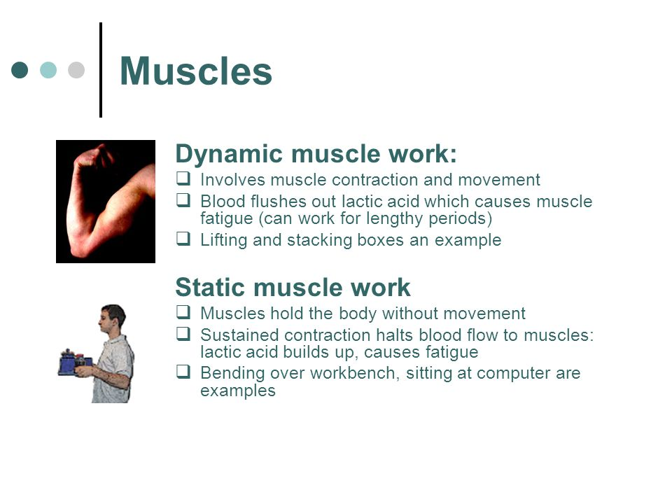 Muscles Dynamic muscle work:  Involves muscle contraction and movement  Blood flushes out lactic acid which causes muscle fatigue (can work for leng