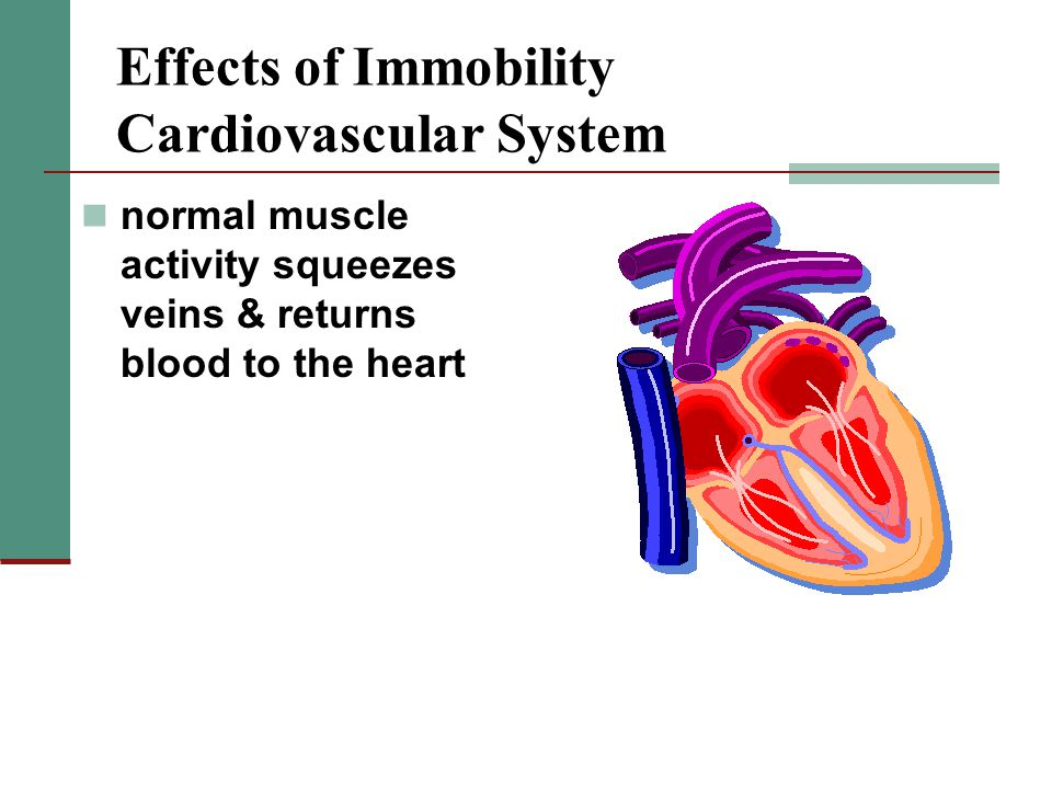 Effects of Immobility Cardiovascular System normal muscle activity squeezes veins & returns blood to the heart