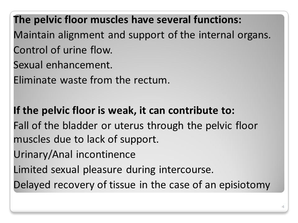 The pelvic floor muscles have several functions: Maintain alignment and support of the internal organs.